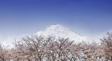 Mount Fuji and pink cherry blossom trees in spring, Japan