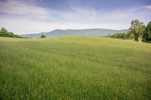 Green Hay Field