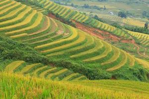 terraços de arroz nas montanhas