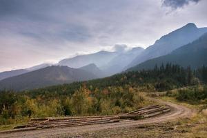 logging in Slovakia photo