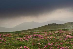 Rhododendrons on the slopes of the mountains in cloudy weather