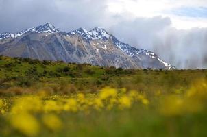 Mountain Flowers photo