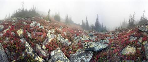 automne brumeux