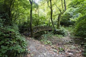 puente de madera