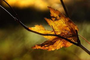 Details of yellow autumn leaves, sunny bokeh light