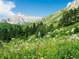 Caucaso del Nord
