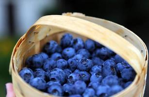 Wicker basket with fresh blueberries photo