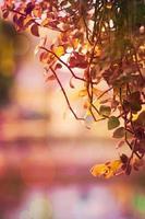 hojas en la temporada de otoño