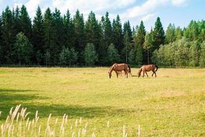 caballos en la granja foto