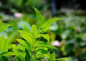 hojas frescas
