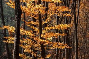 bosque de otoño brumoso
