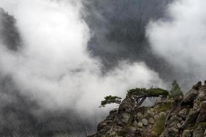 Mountain tree on a ledge photo