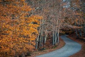 kronkelende bergweg in de herfst