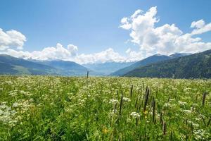 Grean meadow in the mountains