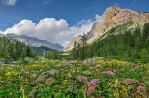 flores en el prado de la montaña