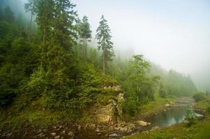 Beautiful pine trees on  mountains photo