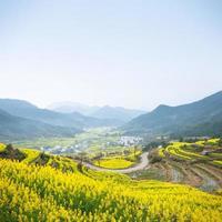 campo de colza y montaña foto