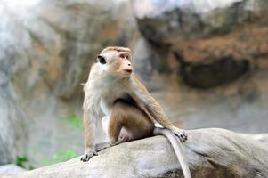 Monkey in the living nature photo