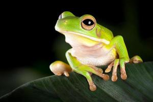 Tree frog in natural environment