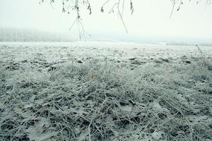 frozen grass and ground frost in winter