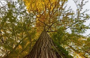Beautiful tree foliage in autumn