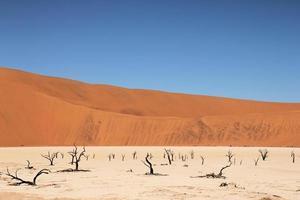 árboles de camelthorn en vlei muertos foto