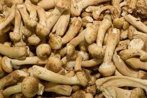 Forest mushrooms photo