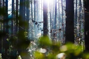 Sunrise in forest photo