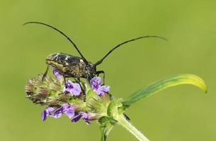 Bug-barbel