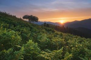 Carpathian Mountains. The sun sets behind the mountains, a fern