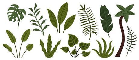 conjunto de hojas y árboles de la selva tropical dibujados a mano vector