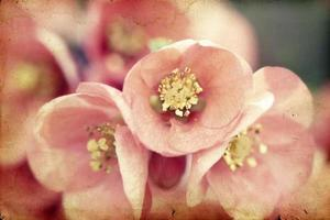 Pink flowers on vintage background
