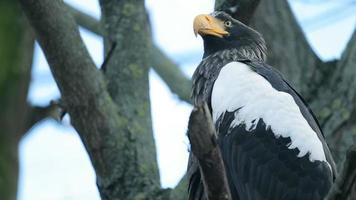 gros oiseau un aigle assis
