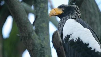 pássaro grande e águia sentada