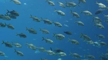grande tanque de peixes video