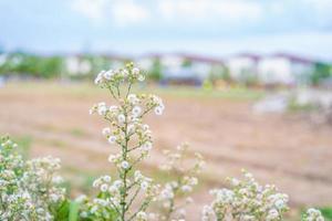 flores de hierba de primavera foto