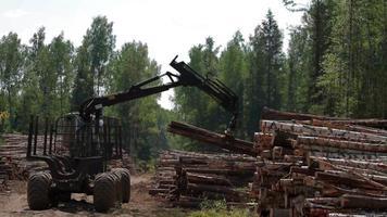 Fällbuncher entlädt Baumstämme im Sägewerk
