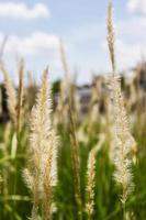 flor hierba impacto luz solar