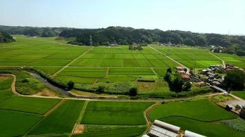 Shooting a vast paddy field in the drone video
