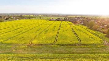 aerea sopra il raccolto di colza