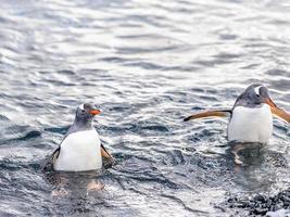 Penguins of Antarctica