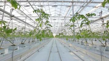 A large greenhouse, a lot of long rows of plants.