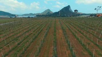 Aerial: Vineyards on Silver lake near Pattaya.