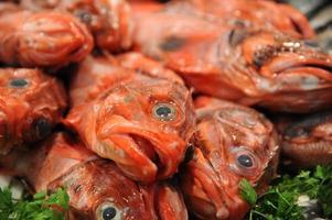 Rose Fish photo