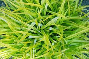 Grassy Plant photo