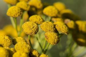 Field plant photo