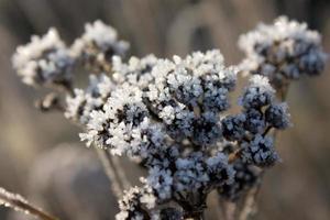 Frozen plant photo