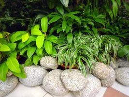 plante verte d'extérieur