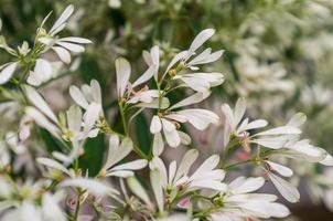 Pure White Plant photo