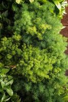 small green plants photo